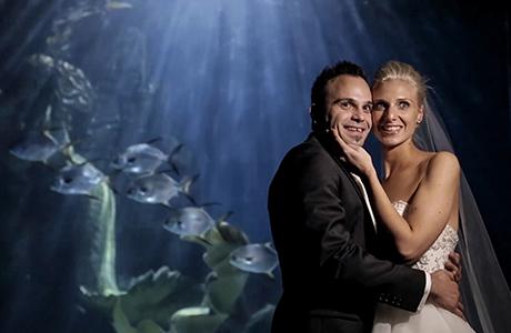 wedding video in Melbourne aquarium