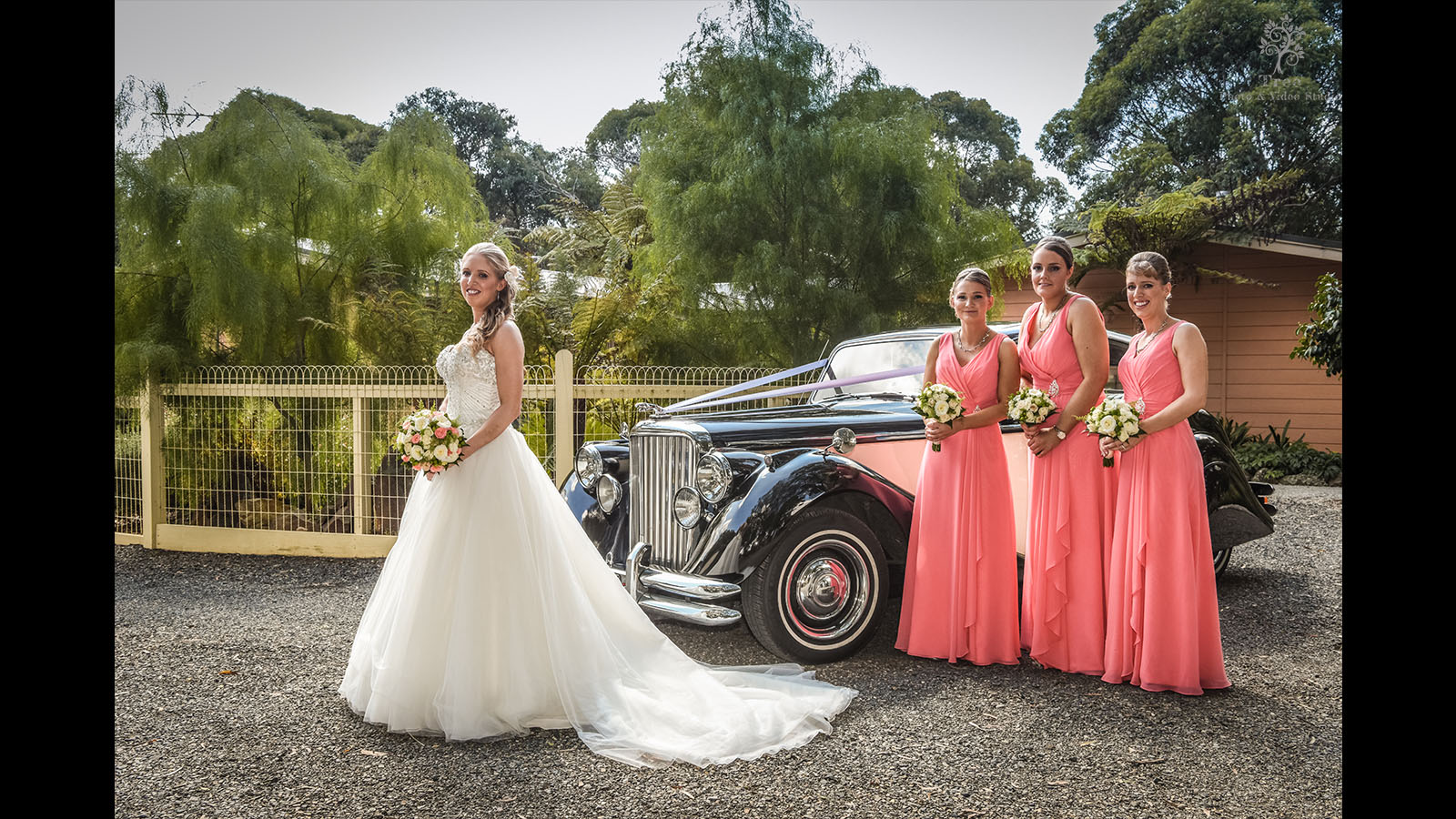 Lyrebird-Falls-Wedding