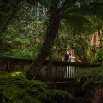 Anika & dean | lyrebird falls wedding photography