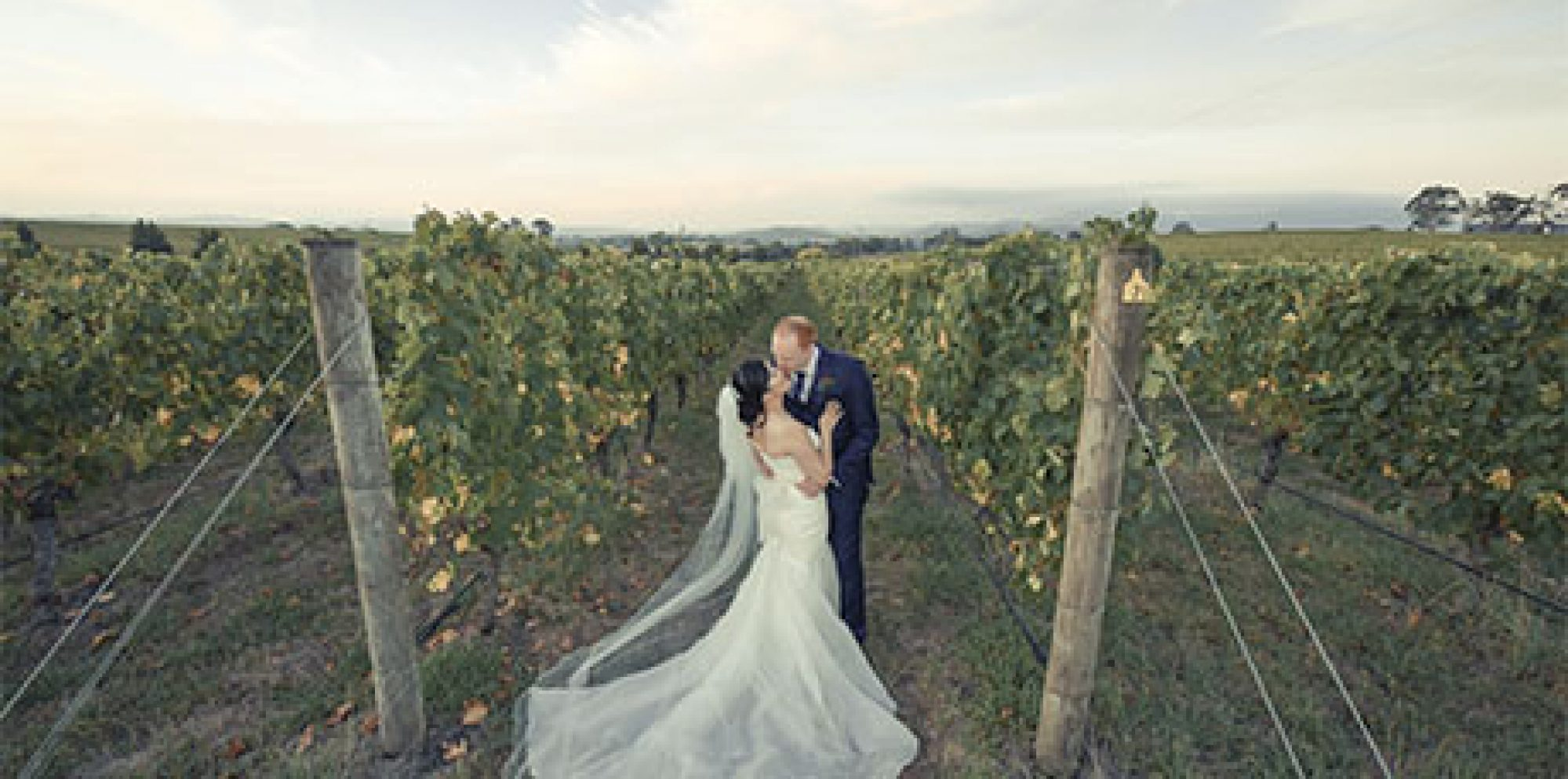 Lily & matt oakridge wines wedding video