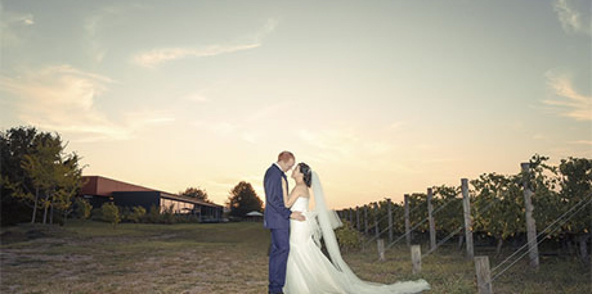 Lily & matt oakridge wines wedding photography