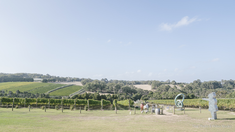 Montalto Vineyard and Olive Grove 1